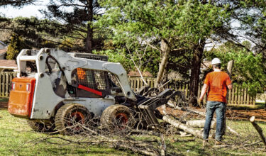 King's Landscapers - Tree Removal