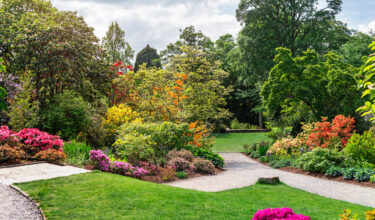 King's Landscapers - Planting Shrubbery + Trees + Flower Beds